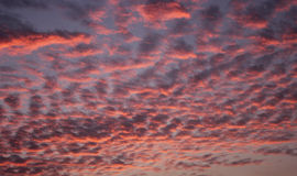 Red Sky Background royalty free stock photography