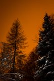 Red sky behind shady trees Stock Photography