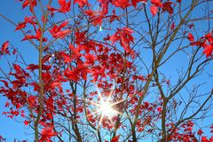 Red, Sky, Branch, Flora stock photography