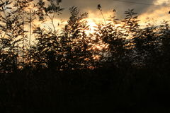 Red Sky through leaves. Sky seen through black leaves at sunset Royalty Free Stock Images