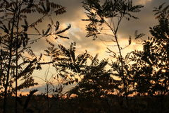Red Sky through leaves. Sky seen through black leaves at sunset Stock Photo