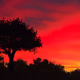 Red sky and single tree at down Stock Photos