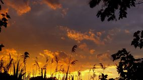 Red sky sunset clouds reed wind Stock Photo
