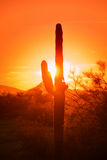 Red sky sunset in desert Stock Photo