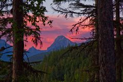 Red sky sunset thru the forest Royalty Free Stock Photography