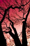 Red sky and tree  Stock Photography