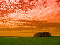 Red sky and trees Stock Images