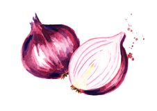 Red sliced onion. Watercolor hand drawn illustration, isolated on white background.  vector illustration