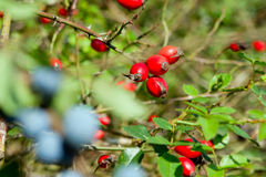 Red sloes and blue sloes Stock Image