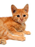 Red small cat Royalty Free Stock Images