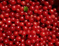 Cherry full background Royalty Free Stock Photo