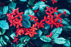Red small flowers with bright green cyan leaves background, toned with instagram filters in retro vintage color Stock Photos