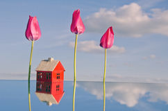 Red small house model on mirror ant tulip flowers Royalty Free Stock Photography