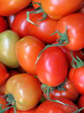 Red small tomato closeup Stock Images