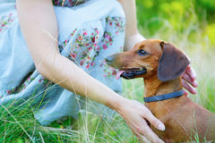 Red smooth-haired dachshund and woman outdoors Stock Photo