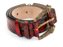 Red snake leather belt Stock Images