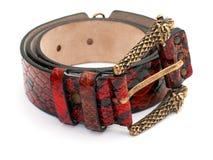 Red snake leather belt. Snake leather belt isolated on white background stock images