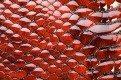 Red snake skin. Stock Image