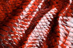 Red snake skin. Royalty Free Stock Images