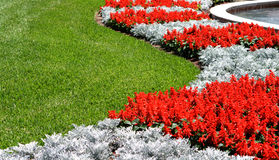 Red Snapdragon Flowers and Grass. Is a beautiful landscaped lawn next to a fountain. There are beautiful red and silver contrasting colors in the curvy royalty free stock photo