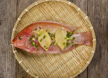 Red snapper stock photography