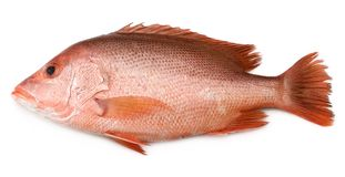 Red Snapper. Popular fish for curries in the tropics Royalty Free Stock Images