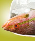 Red Snapper. On ice stock photo