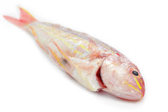 Red snapper fish Royalty Free Stock Image