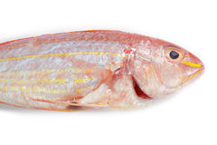 Red snapper fish Stock Photos