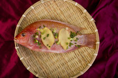 Red Snapper Fish. stock photography