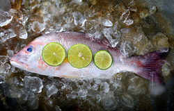Red snapper fish from fishery market. Stock Photo