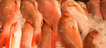 Fish on ice at a fish market. Red snapper fish on ice at a fish market being sold Stock Images