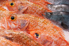 Red snapper fish. On ice at fish market in Sydney, New South Wales, Australia royalty free stock photo