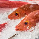 Red snapper at a fish market.  Stock Photography