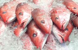 Free Red Snapper Fish On Ice At Fish Market Royalty Free Stock Images - 179722089