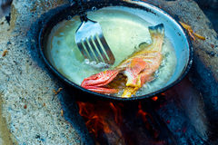 Red snapper fish in pan with oil Royalty Free Stock Photography