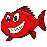 Red Snapper Fish Royalty Free Stock Photos