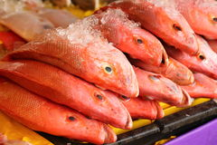 Red Snapper Frish Royalty Free Stock Images