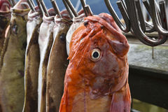 Red snapper Stock Photos
