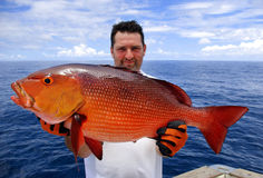 Red snapper. Lucky fisherman holding a beautiful red snapper royalty free stock photo