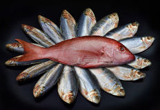 Red Snapper and Mackerel. Stock Photography