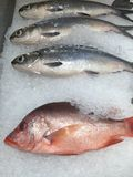 Red snapper and milk fishes Stock Photo