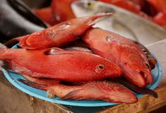 Red Snappers Royalty Free Stock Images