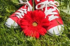 Red sneakers Stock Photography
