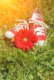 Red sneakers with flower Royalty Free Stock Photos