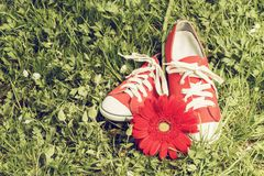 Red sneakers with flower. Toned image Royalty Free Stock Image