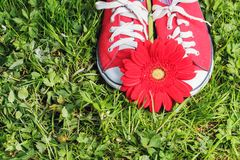 Red sneakers with gerbera flower Royalty Free Stock Images