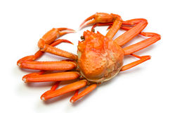 Red snow crab royalty free stock image