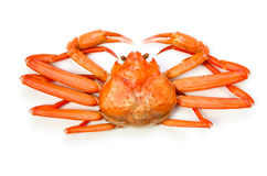 Red snow crab Royalty Free Stock Images