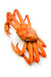 Red snow crab Stock Image